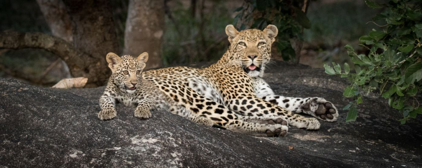 MT-Lookout-Female-and-cub