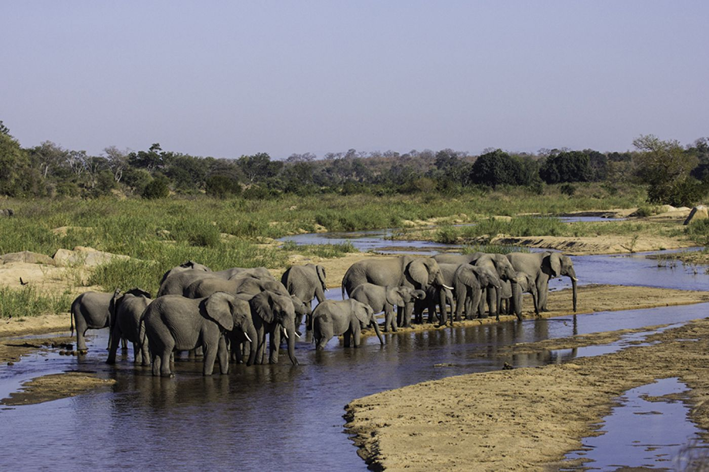 Elephants Visit The River Daily